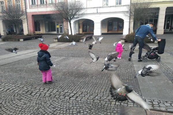 Holuby sa zdržiavajú na námestiach a v parkoch, kde majú dostatok potravy.