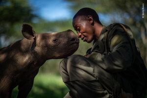 Náhradná matka. Záber zachytáva ochrancu Eliasa Mugambiho s mláďaťom nosorožca ostronosého v záchrannej stanici v Keni. Mláďatá ako Kuti na obrázku sa do zariadenia dostanú po tom, ako pytliaci ulovia ich matky.