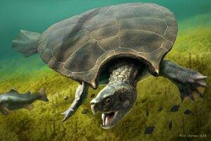 Umelecká predstava o gigantickej korytnačke, ktorá žila na severe Južnej Ameriky pred ôsmimi miliónmi rokov.