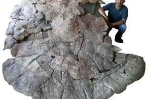 Tento pancier našli v usadeninách, ktorých vek odhadli na osem miliónov rokov.