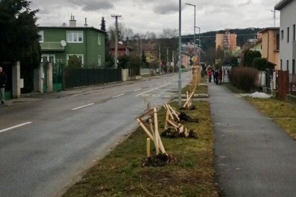 Polámané stromy na Inoveckej ulici.