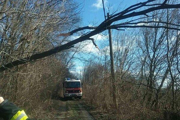 Na mnohých miestach stromy nevydržali silný nápor vetra.