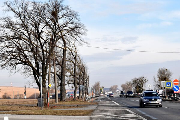 Stromy sú popri ceste z Košíc do U. S. Steelu orezané neštandardne.