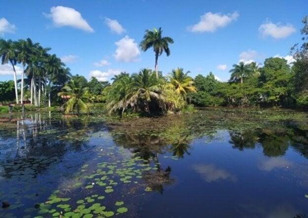 Prostredie močiara obklopené tropickými palmami.