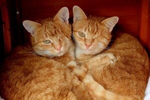 Jednookí bratia Ben a Jack.