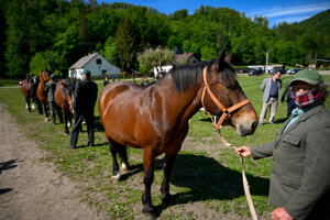 Prehliadka koní chráneného národného plemena norika muránskeho za účasti ministra  v Stredisku chovu koní štátneho podniku Lesy SR v Dobšinej.
