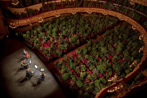Hudobníci nacvičujú Pucciniho skladbu Chryzantémy pred črepníkovými rastlinami. Barcelonskú operu Liceu otvárajú v rámci uvoľňovania opatrení proti koronavírusu.