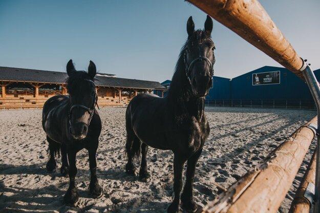Frízske kone v jazdeckom areáli Nestville Horses.