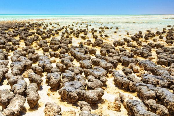 Ilustračná fotografia. Dnešné stromatolity na pobreží Austrálie. Podľa novej štúdie predchodcovia mikróbov, ktoré tieto útvary po sebe zanechávajú, potrebovali pre život namiesto kyslíka arzén.