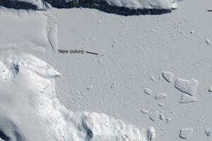 Nová kolónia pri zátoke Yule na juhu Antarktídy.