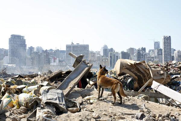 Záchranársky pes pomáha prehľadávať trosky.