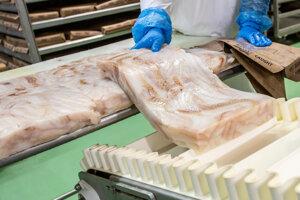 V Žiline používajú celé filety tresky, ktoré sú hĺbkovo zamrazené vždy do 24 hodín od vylovenia.