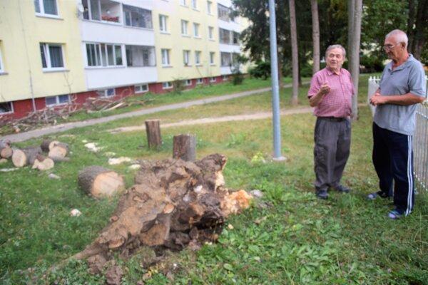 Topoľ bol vraj prehnitý. Juraj Bučo (v popredí) sKolomanom Turocim tvrdia, že bolo šťastím, že sa nikomu nič nestalo.