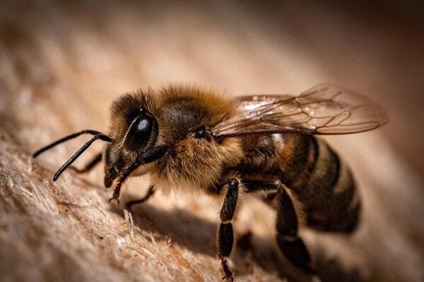 Včelí jed je silnejší, než sa očakávalo.