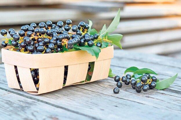 Plody čremchy dozrievajú v septembri, no vydržia na strome až do októbra. Sú veľmi sladké, možno ich sušiť ako hrozienka.