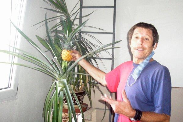 Zvolenčan Bohúš Pavúk si vypestoval ananás.