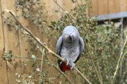 Jeden z papagájov v areáli Lincolnshire Wildlife Park.