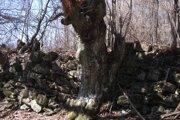 Mohutné hradby na vrchu Kopec stále čakajú na archeológov.