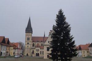 Strom má výšku 14 metrov a vek približne 30 až 35 rokov.