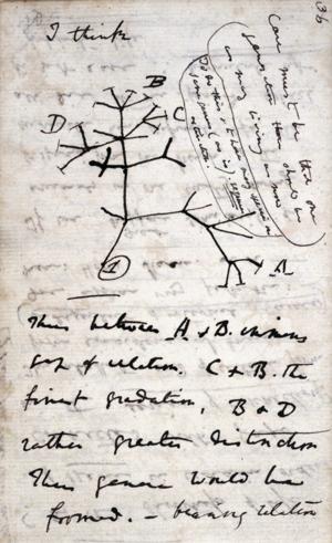 Prvý náčrt stromu života od Charlesa Darwina. Pracovníci knižnice sa domnievajú, že zápisník s týmto náčrtom niekto ukradol.