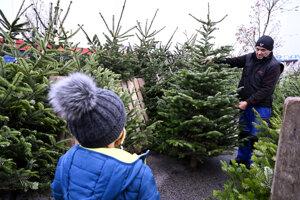 Predaj vianočných stromčekov v Trenčíne.