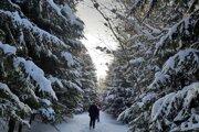 Pohľad na stromy pod snehom.