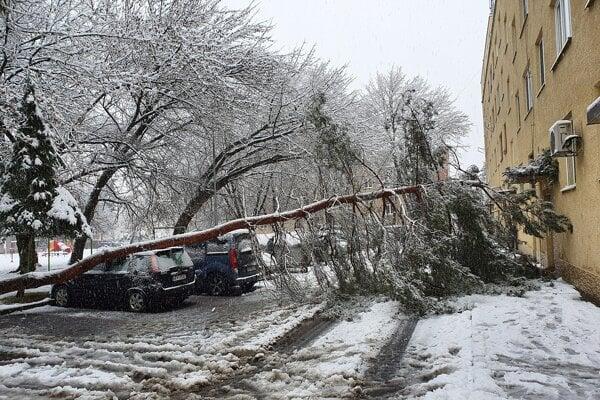 Mnohé stromy nevydržali nápor ťažkého snehu.