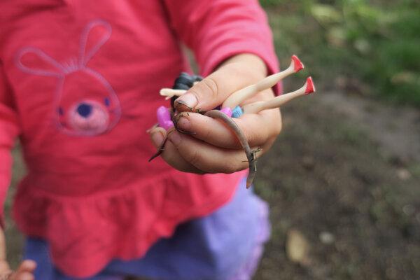 Rodičia sa v rámci homeschoolingu často snažia prepojiť učivo s vonkajším svetom.