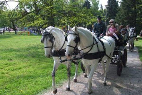Záujem prejavujú návštevníci hlavne o jazdu na kočiari ťahanom lipicanmi.