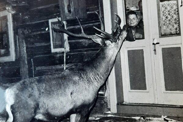 """Nižnobocký maskot: Jeleň Mišo miloval tetu Etelu """"od Futi"""", pravidelne ju navštevoval a ona mala pre neho vždy nejakú sladkosť. Živá atrakcia Nižnej Boce v 80. rokoch minulého storočia."""