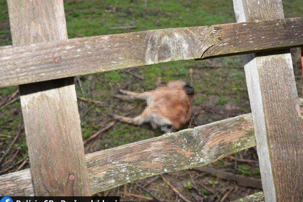 Čo zvieratá roztrhalo, zatiaľ nevedno.