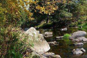 """Víťazom v kategórii Biodiverzita sa stalo Združenie Slatinka zo Zvolenskej Slatiny za projekt Zachránený """"riekoles"""" pri Slatinke. Rieka Slatina je biokoridorom, v ktorom sa nachádza 17 typov biotopov európskeho a národného významu. Cieľom projektu bolo zabrániť poškodeniu tohto prírodne cenného údolia rieky a zároveň otvoriť diskusiu o lepšej ochrane vôd a ich udržateľnom využívaní."""
