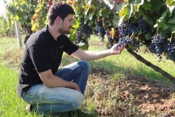 Univerzita sa chystá vzdelávať budúcich vinárov.