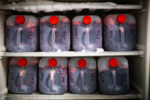 Krv na kŕmenie majú uloženú v chladničkách v bandaskách.