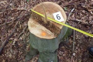 Neznámy páchateľ vyrúbal v obci Pčoliné 150 stromov.