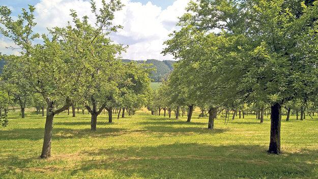 Tradičné ovocné sady majú vysokú prírodnú a kultúrnu hodnotu v krajine.