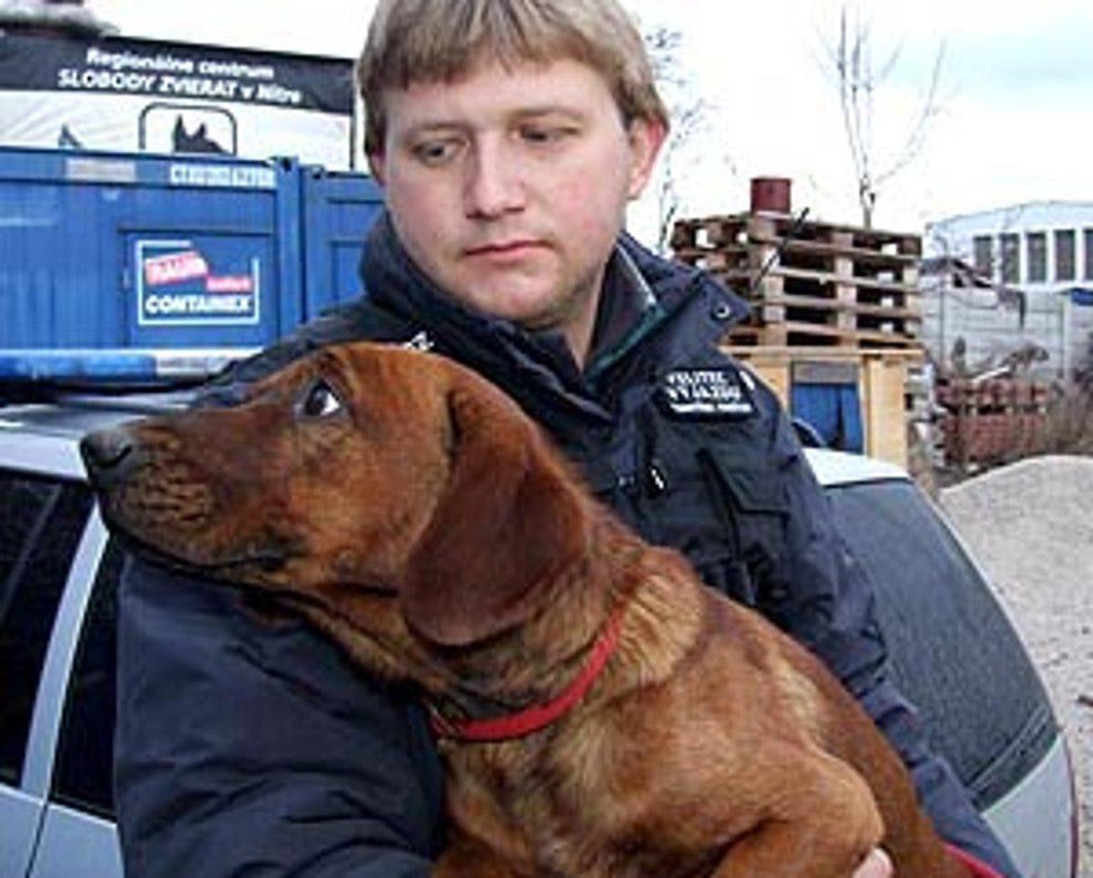 Dopravu ohrozovali psy. Niekto ich vyhodil pri rýchlostnej ceste ... 67b36fa4127