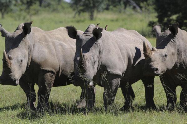 Nosorožce v rezervácii Welgevonden v provincii Limpopo v Južnej Afrike.