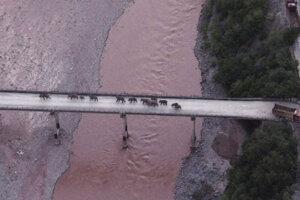 Stádo slonov prechádza po moste ponad rieku Juan.