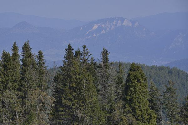 Lesy v okolí Ždiaru.