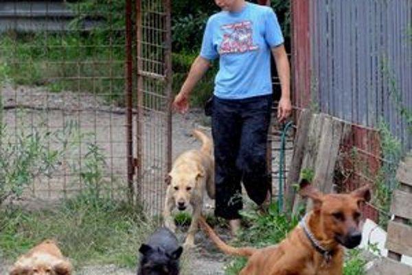 Psy v Nitre mali podľa mestského nariadenia nosiť náhubky. Podľa prokurátora ide toto ustanovenie nad rámec zokona.