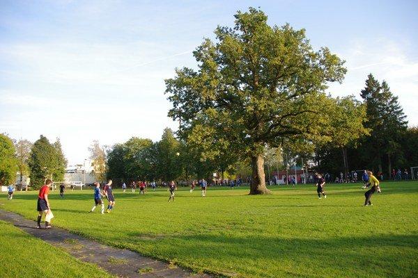 Dub letný (Quercus robur) má asi 150 rokov, Orissaare, Saaremaa, Estónsko – pri rozširovaní futbalového ihriska v roku 1951 sa strom ocitol priamo uprostred neho. Odvtedy miestnym školákom pomáha pri prihrávkach a ak treba, ponúka tieň.