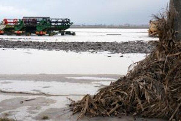 Vačšie nepríjemnosti ako nadmerná vlaha robí poľnohospodárom sucho.