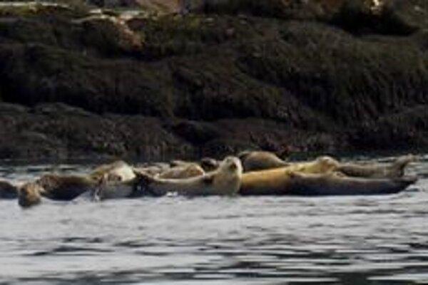 Záliv Fundy. Pre teplú vodu sem chodia tulene a niekedy aj veľryby.