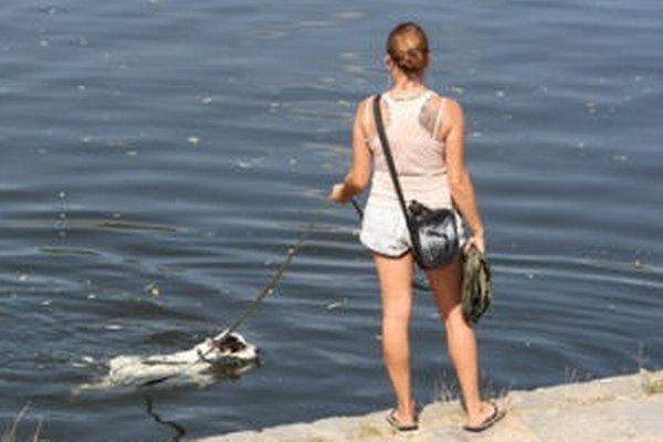 Banskoštiavnickí poslanci obmedzili pohyb psov v okolí tajchov v katastri mesta.