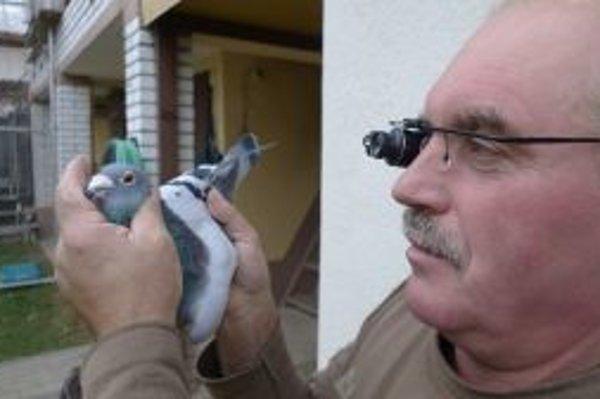 """Jozef Bojo. Svojich holubov odhaduje s pomocou špeciálneho """"kukátka""""."""