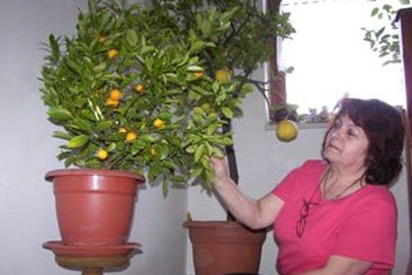 Ružena Hrmová so svojimi citrusmi.
