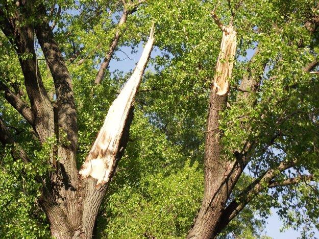 Z topoľa pri rieke sa odlomili dva kostrové konáre.