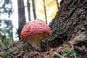 Prechádzka v lese ponúka aj pekné zábery pre fotografov.