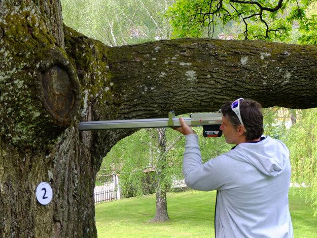 S pomocou rezistografu zisťuje, ako je na tom strom vo vnútri.